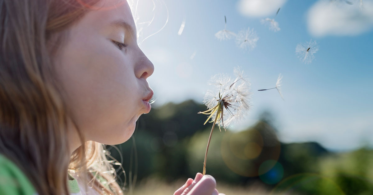 A child is blowing on a dandelion
